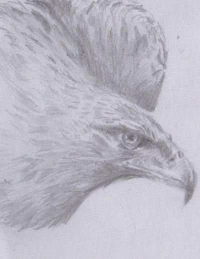 portrait-animal-aigle-sophie-moedbeck