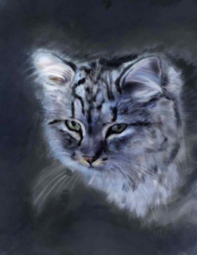 moumin-portrait-animal-pet-illustration-sophie-moedbeck-sophiescolors-cat-richmond-londres